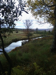 A view from one of the trails at Canaan Valley Resort State Park.